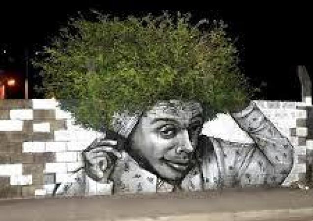 afro bush